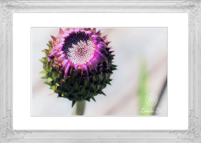 frame-1992102_1920