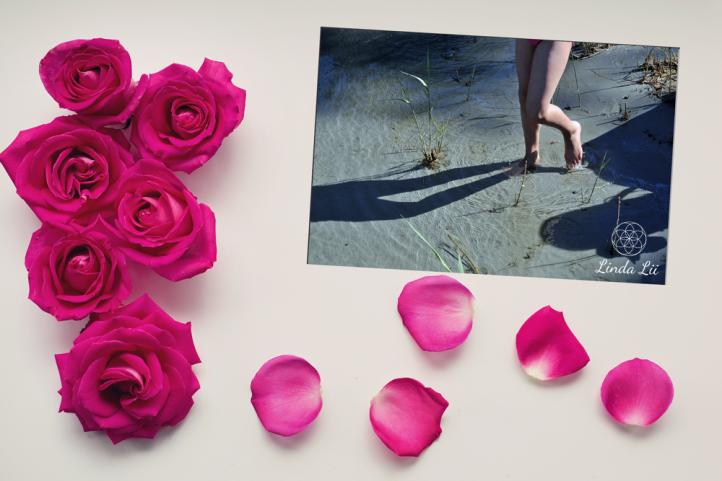 roses-2249400_1920